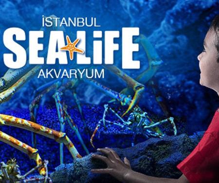 Ocak ayında Sea Life Akvaryum'da %25 indirim